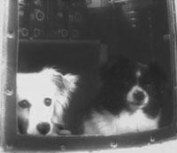 Дезик и Цыган— первые собаки, совершившие полёт в космос